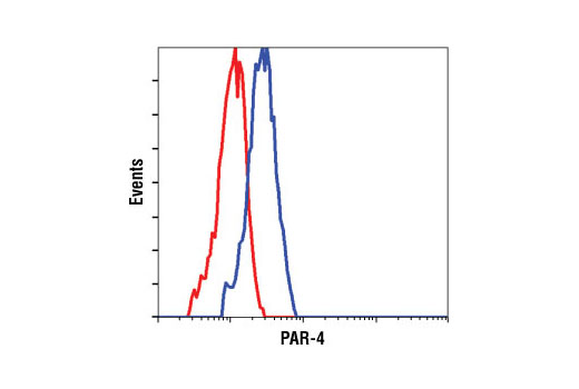 Flow cytometric analysis of HeLa cells, using PAR-4 Antibody (blue) compared to a nonspecific negative control antibody (red).