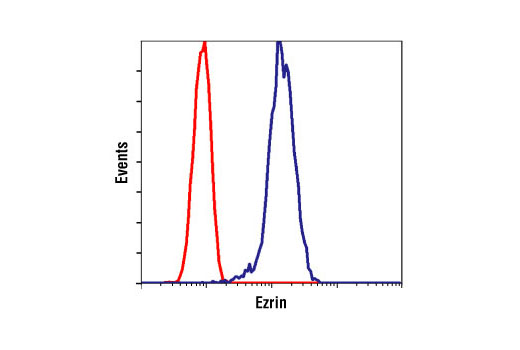 Flow cytometric analysis of untreated HeLa cells, using Ezrin Antibody (blue) compared to a nonspecific negative control antibody (red).