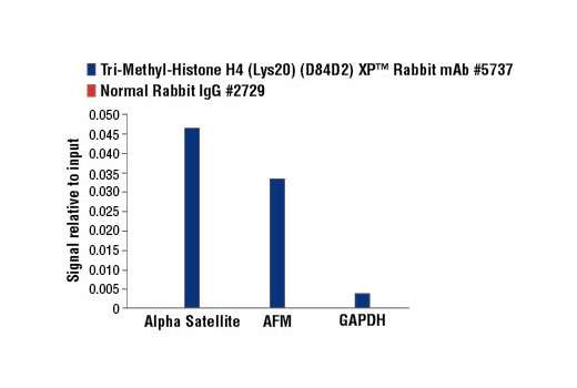 Chromatin immunoprecipitations were performed with cross-linked chromatin from HeLa cells and either Tri-Methyl-Histone H4 (Lys20) (D84D2) Rabbit mAb, or Normal Rabbit IgG #2729, using SimpleChIP<sup>®</sup> Enzymatic Chromatin IP Kit (Magnetic Beads) #9003. The enriched DNA was quantified by real-time PCR using SimpleChIP<sup>® </sup>Human α Satellite Repeat Primers #4486, SimpleChIP<sup>®</sup> Human AFM Intron 1 Primers #5098, and SimpleChIP<sup>®</sup> Human GAPDH Exon 1 Primers #5516. The amount of immunoprecipitated DNA in each sample is represented as signal relative to the total amount of input chromatin, which is equivalent to one.