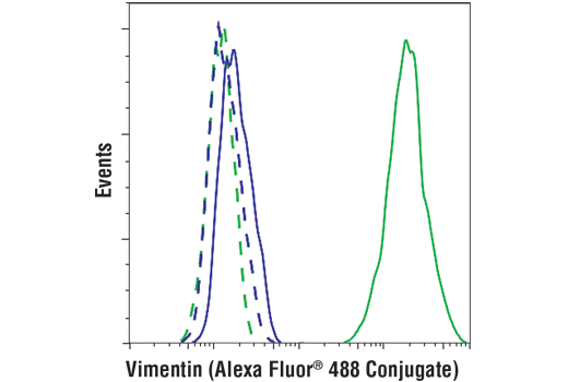 Flow cytometric analysis of MCF7 (blue) and HeLa (green) cells using Vimentin (D21H3) XP® Rabbit mAb (Alexa Fluor® 488 Conjugate) (solid lines) or concentration-matched Rabbit (DA1E) mAb IgG XP® Isotype Control (Alexa Fluor® 488 Conjugate) #2975 (dashed lines).