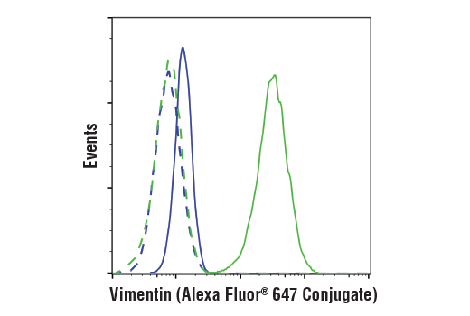 Flow cytometric analysis of MCF7 (blue) and HeLa cells (green) using Vimentin (D21H3) XP® Rabbit mAb (Alexa Fluor® 647 Conjugate) (solid lines) or concentration-matched Rabbit (DA1E) mAb IgG XP® Isotype Control (Alexa Fluor® 647 Conjugate) #2985 (dashed lines).