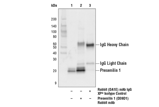 Immunoprecipitation Image 1: Presenilin 1 (D39D1) Rabbit mAb