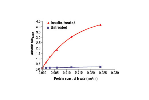 Figure 2: The relationship between protein concentration of lysates from untreated and insulin-treated CHO-IR/IRS-1 cells and the absorbance at 450 nm is shown. After starvation, CHO-IR/IRS-1 cells (85% confluence) were treated with insulin (100 nM, 2 min at 37°C) and then lysed.