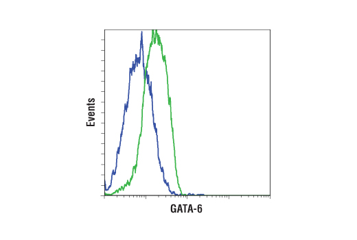Flow cytometric analysis of SKOV3 cells (blue) and HUH-7 cells (green) using GATA-6 (D61E4) XP® Rabbit mAb. Anti-rabbit IgG (H+L), F(ab')2 Fragment (Alexa Fluor 488 Conjugate) #4412 was used as a secondary antibody.