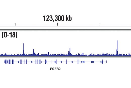 Chromatin immunoprecipitations were performed with cross-linked chromatin from Caco-2 cells and GATA-6 (D61E4) XP<sup>®</sup> Rabbit mAb, using SimpleChIP<sup>®</sup> Plus Enzymatic Chromatin IP Kit (Magnetic Beads) #9005. DNA Libraries were prepared using SimpleChIP<sup>®</sup> ChIP-seq DNA Library Prep Kit for Illumina<sup>®</sup> #56795. The figure shows binding across FGFR2, a known target gene of GATA-6 (see additional figure containing ChIP-qPCR data). For additional ChIP-seq tracks, please download the product data sheet.