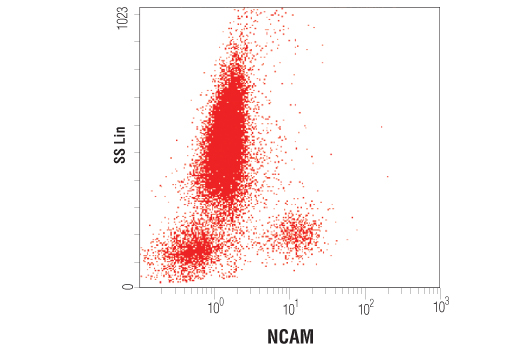 Flow cytometric analysis of whole blood using NCAM (CD56) (123C3) Mouse mAb.