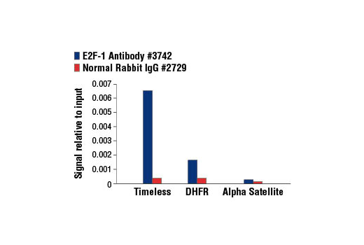Chromatin Immunoprecipitation Image 1: E2F-1 Antibody