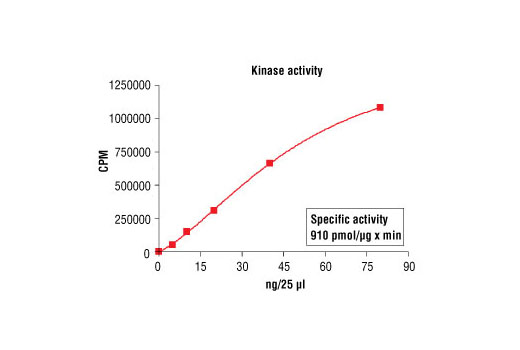 Image 5: HTScan® PKCε Kinase Assay Kit