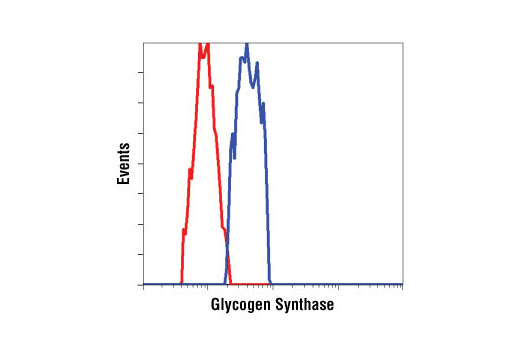 Flow Cytometry Image 1: Glycogen Synthase Antibody