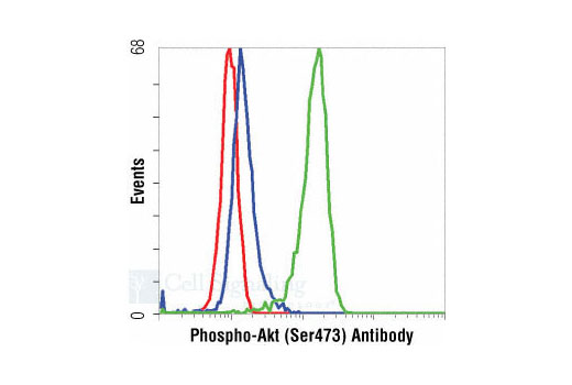 Flow cytometric analysis of Jurkat cells, untreated (green) or LY294002 #9901 and Wortmannin #9951 treated (blue), using Phospho-Akt (Ser473) (193H12) Rabbit mAb compared to a nonspecific negative control antibody (red).