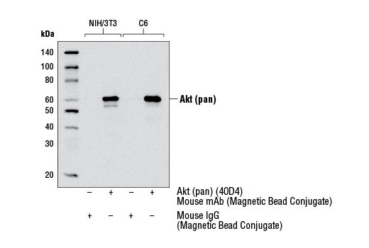 Polyclonal Antibody - Mouse IgG (Magnetic Bead Conjugate) - Immunoprecipitation - 400 µl #5873 - Primary Antibodies