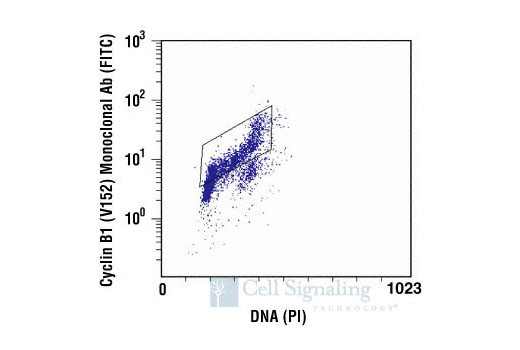 Flow cytometric analysis of untreated Jurkat cells, using Cyclin B1 (V152) Mouse mAb versus propidium iodide (DNA content). The box indicates Cyclin B1-positive cells.