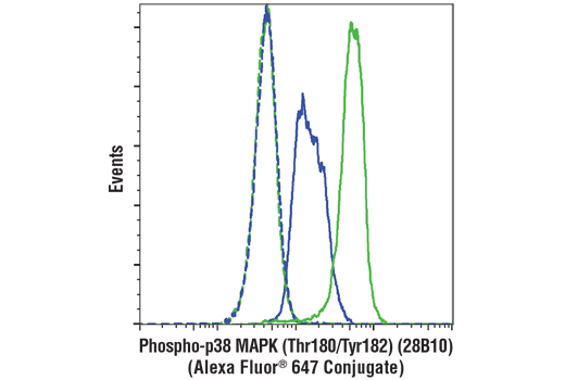 Flow cytometric analysis of THP-1 cells, untreated (blue) or treated with Anisomycin (25ug/ml, 30 min; green) using Phospho-p38 MAPK (Thr180/Tyr182) (28B10) Mouse mAb (Alexa Fluor® 647 Conjugate) (solid lines) or concentration-matched Mouse (MOPC-21) mAb IgG1 Isotype Control (Alexa Fluor<sup>®</sup> 647 Conjugate) #4843 (dashed lines).