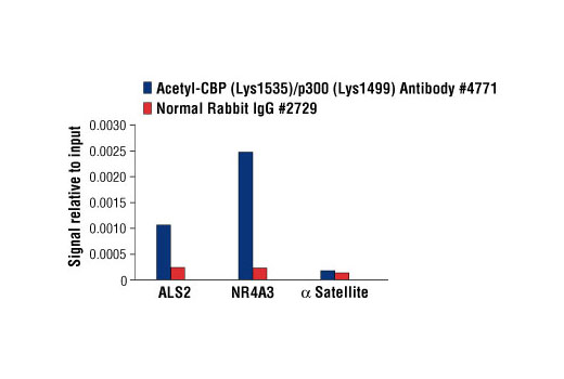 Chromatin immunoprecipitations were performed with cross-linked chromatin from 293 cells treated with Forskolin #3828 (30uM) and either Acetyl-CBP (Lys1535)/p300 (Lys1499) Antibody or Normal Rabbit IgG #2729, using SimpleChIP<sup>®</sup> Enzymatic Chromatin IP Kit (Magnetic Beads) #9003. The enriched DNA was quantified by real-time PCR using human ALS2 exon 1 primers, SimpleChIP<sup>®</sup> Human NR4A3 Promoter Primers #4829, and SimpleChIP<sup>®</sup> Human α Satellite Repeat Primers #4486. The amount of immunoprecipitated DNA in each sample is represented as signal relative to the total amount of input chromatin, which is equivalent to one.
