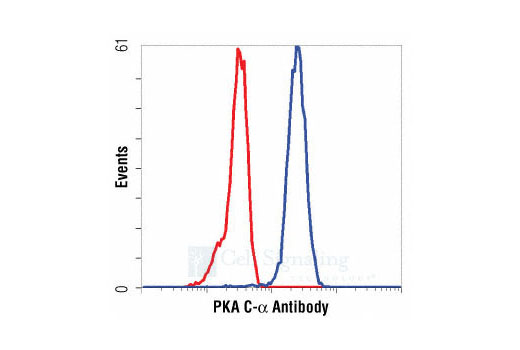 Flow cytometric analysis of HeLa cells, using PKA C-α Antibody (blue) compared to a nonspecific negative control antibody (red).