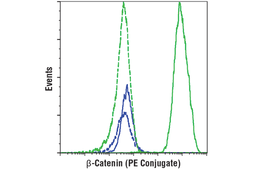 Flow cytometric analysis of NCI-H28 cells (blue) and Hela cells (green) using β-Catenin (L54E2) Mouse mAb (PE Conjugate) (solid lines) or a concentration-matched Rabbit (DA1E) mAb IgG XP<sup>®</sup> Isotype Control (PE Conjugate) #5742 (dashed lines).