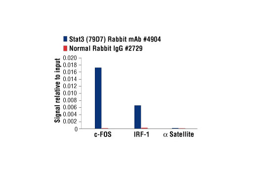 Chromatin immunoprecipitations were performed with cross-linked chromatin from Hep G2 cells treated with IL-6 (100 ng/ml) for 30 minutes, and either Stat3 (79D7) Rabbit mAb or Normal Rabbit IgG #2729 using SimpleChIP<sup>®</sup> Enzymatic Chromatin IP Kit (Magnetic Beads) #9003. The enriched DNA was quantified by real-time PCR using human IRF-1 promoter primers, SimpleChIP<sup>®</sup> Human c-Fos Promoter Primers #4663, and SimpleChIP<sup>®</sup> Human α Satellite Repeat Primers #4486. The amount of immunoprecipitated DNA in each sample is represented as signal relative to the total amount of input chromatin, which is equivalent to one.