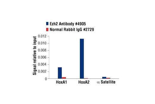 Polyclonal Antibody Histone Lysine N-Methyltransferase Activity h3-k27 Specific