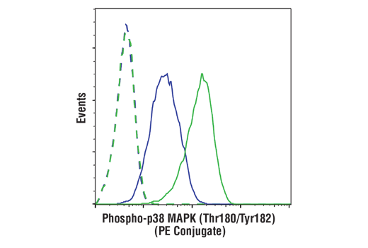 Flow cytometric analysis of THP-1 cells, untreated (blue) or treated with Anisomycin (25 ug/ml, 30 min; green) using Phospho-p38 MAPK (Thr180/Tyr182) (3D7) Rabbit mAb (PE Conjugate) (solid lines) or concentration-matched Rabbit (DA1E) mAb IgG XP<sup>®</sup> Isotype Control (PE Conjugate) #5742 (dashed lines).