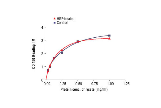 Figure 2: The relationship between protein concentration of lysates from untreated and HGF-treated A431 cells and kit assay optical density readings is shown. After starvation, A431 cells (85% confluence) were treated with HGF (40 ng/ml) for 5 min at 37°C, and then lysed.