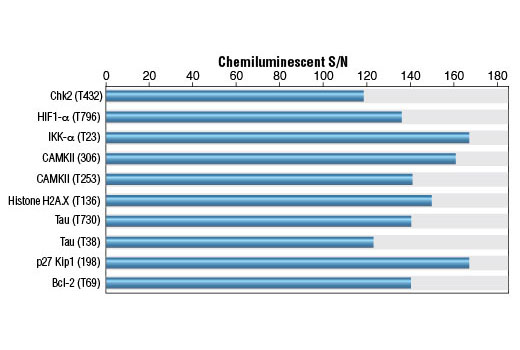 Polyclonal Antibody - Phospho-Threonine Antibody (P-Thr-Polyclonal) (HRP Conjugate) - 100 µl #6949 - #6949