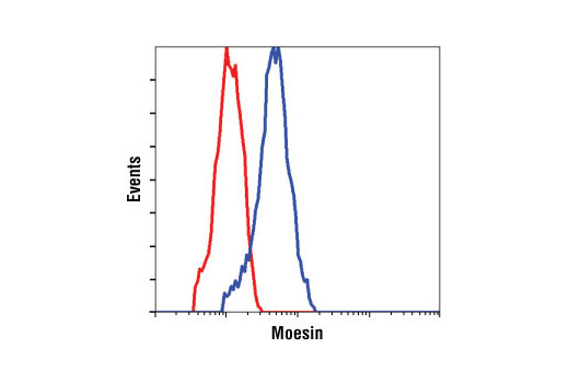 Flow cytometric analysis of HeLa cells, using Moesin (Q480) Antibody (blue) compared to a nonspecific negative control antibody (red).