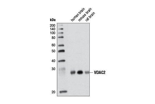Mouse Negative Regulation of Protein Polymerization - count 20