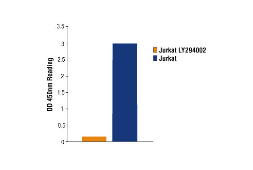 Figure 1: Phospho-Akt1 (Ser473) is detected in untreated Jurkat cells, where as no signal is detected with treatment with LY294002 , a specific PI3 Kinase inhibitor using PathScan<sup>®</sup> Phospho-Akt1 (Ser473) Sandwich ELISA Kit #7160.