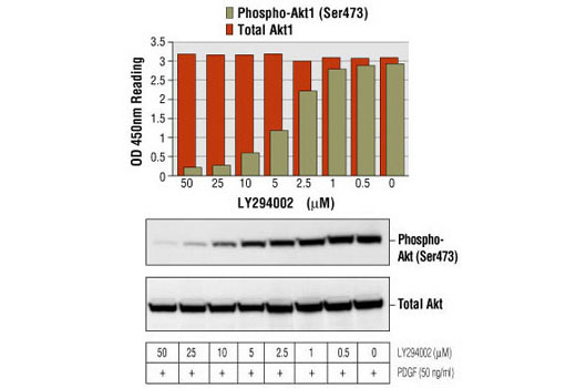 Figure 1: Treatment of NIH/3T3 cells with various concentrations of LY294002 blocks PDGF-stimulated phosphorylation of Akt1 at serine 473 detected by PathScan Phospho-Akt1 (Ser473) Sandwich ELISA kit , #7160, but does not affect the level of total Akt1 protein detected by PathScan Total Akt1 Sandwich ELISA kit #7170. OD450 readings are shown in the top figure, while the corresponding Western blot, using Phospho-Akt (Ser473) Antibody #9271 or Akt Antibody #9272, is shown in the bottom figure.