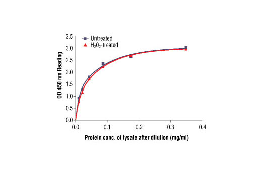 Figure 2: The relationship between protein concentration of lysates from untreated and hydrogen peroxide treated Jurkat cells and kit assay optical density readings. Jurkat cells (0.8 x 106 cells/ml) were treated with hydrogen peroxide (2 mM) for 2 min at 25oC, and then lysed.