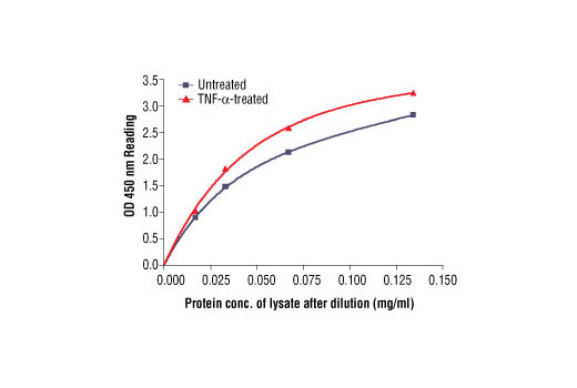 Figure 2: The relationship between protein concentration of lysates from untreated and TNF-alpha-treated HeLa cells and kit assay optical density readings. After starvation, HeLa cells (85% confluence) were treated with TNF-alpha (10 ng/ml) for 7 min at 37oC, and then lysed.