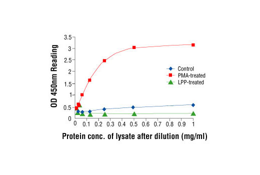 Figure 2: Linear relationship between protein concentration of lysates from untreated and PMA-treated NIH/3T3 cells and kit assay optical density readings. Cells (80% confluence) were treated with PMA (120 ng/ml) and lysed after incubation at 37ºC for 30 minutes. Lambda protein phosphatase (LPP) treatment of control cell lysates was performed at 37ºC for 90 minutes.