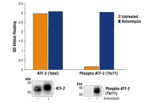 Image 1: PathScan® Phospho-ATF-2 (Thr71) Sandwich ELISA kit