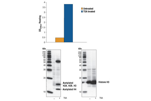 PathScan® Acetylated Histone H3 Sandwich ELISA Kit - ELISA, UniProt ID P68431, Entrez ID 8350 #7232, Histone H3