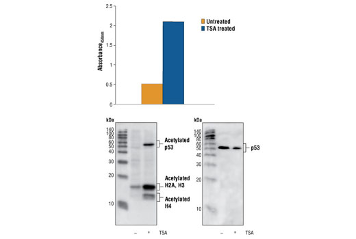 Figure 1: Treatment of COS cells with TSA causes accumulation of acetylation on p53, detected by Sandwich ELISA Kit #7236, but does not affect the level of p53 protein, detected by Western analysis. The absorbance at 450 nm is shown in the top figure, while the corresponding Western blot using the Acetylated Lysine mouse mAb (Ac-K-103) #9681 (left panel) or p53 Antibody #2524 (right panel), is shown in the bottom figure.