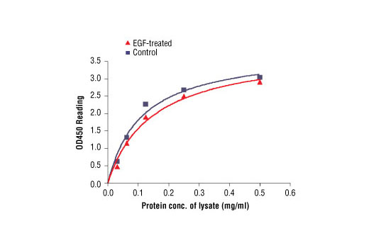 Figure 2: The relationship between protein concentration of lysates from untreated and EGF-treated A431 cells and kit assay optical density readings. After starvation, A431 cells (85% confluence) were treated with EGF (100 ng/ml) for 5 min at 37°C, and then lysed.