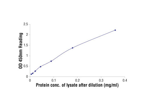 Figure 2: Linear relationship between protein concentration of lysates from VEGF-treated HUVE cells and kit assay optical density readings. HUVE cells (85% confluence) were treated with VEGF (50 ng/ml), and lysed after growth at 37°C for 2 min.