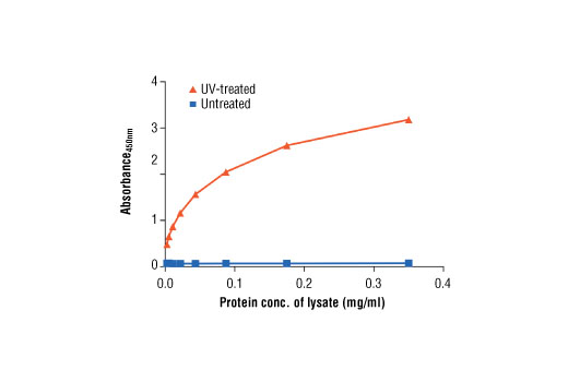 Figure 2: Linear relationship between protein concentration of lysates from untreated and UV-treated HT-29 cells and kit assay optical density readings. HT-29 cells (80% confluence) were UV-treated and lysed after incubation at 37ºC for 2 hours.