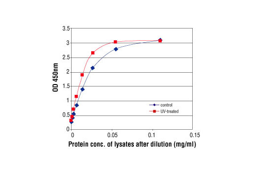 Figure 2: Linear relationship between protein concentration of lysates from UV-treated and control HT-29 cells and kit assay optical density readings. HT-29 cells (80% confluence) were UV-treated and lysed after incubation at 37oC for 2 hours.