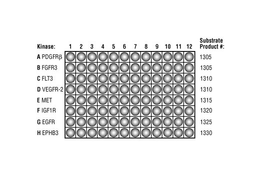 Image 3: HTScan® Profiling Kit (Tyrosine Kinase Set I)