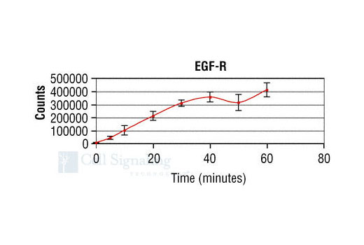 Image 4: HTScan® EGFR Kinase Assay Kit