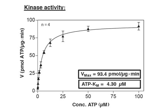 Image 6: HTScan® EGFR Kinase Assay Kit