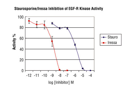 Image 2: HTScan® EGFR Kinase Assay Kit