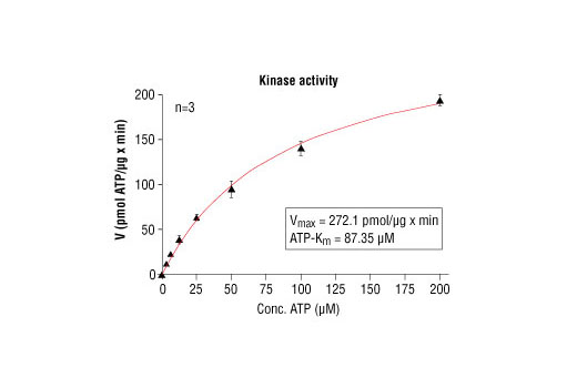 Image 5: HTScan® Akt2 Kinase Assay Kit