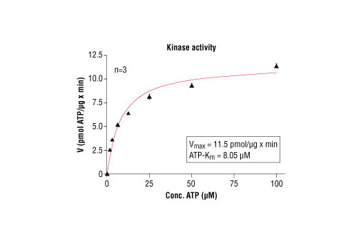 Image 5: HTScan® Akt3 Kinase Assay Kit
