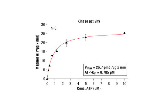 Image 5: HTScan® CDK2/CycA Kinase Assay Kit