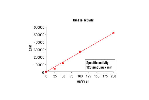 Image 5: HTScan® PDK1 Kinase Assay Kit
