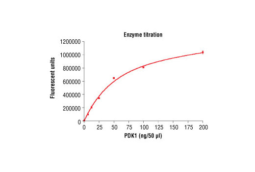 Image 1: HTScan® PDK1 Kinase Assay Kit