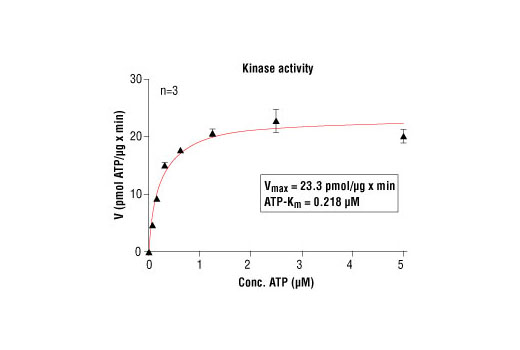 Image 5: HTScan® PKCα Kinase Assay Kit