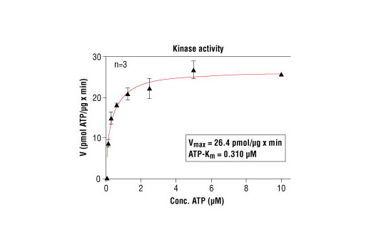 Image 5: HTScan® PKCβ I Kinase Assay Kit
